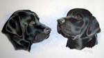 Two black labradorss pet portrait