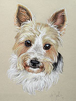Terrier pet portrait