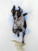 running German short haired pointer dog
