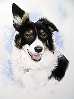 Pet portrait of a tri-colur Collie dog