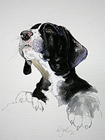 Great Dane pup watercolour portrait