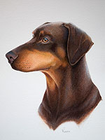 Doberman pointer