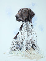 German short haired pointer pet portrait