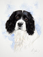 Black & white spaniel pet portrait