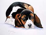 Beagle dog pet portrait